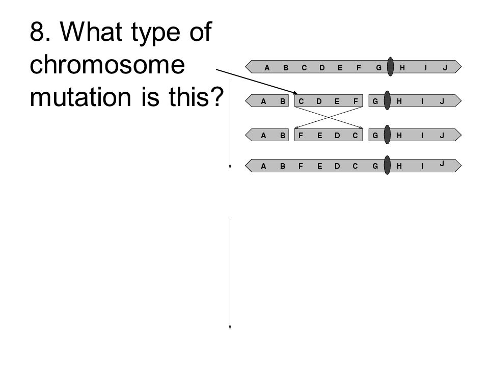 8. What type of chromosome mutation is this