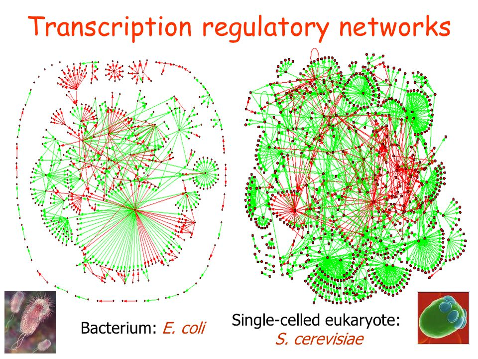Transcription regulatory networks