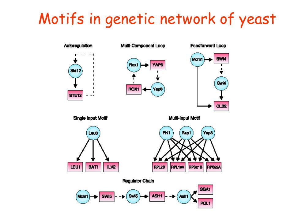 Motifs in genetic network of yeast