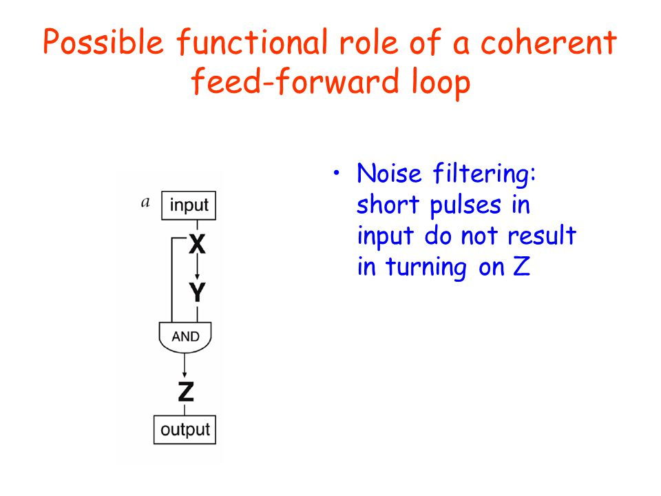 Possible functional role of a coherent feed-forward loop