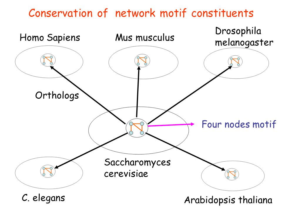 Conservation of network motif constituents