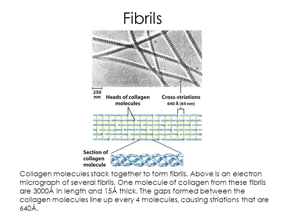 Fibrils