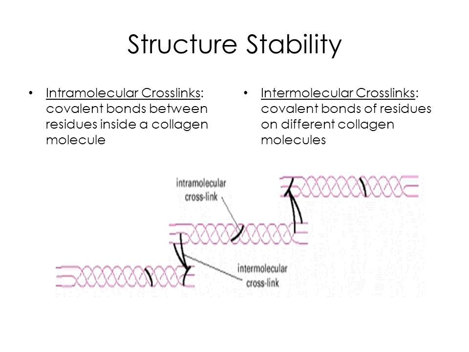 Structure Stability Intramolecular Crosslinks: covalent bonds between residues inside a collagen molecule.