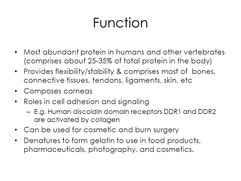 Function Most abundant protein in humans and other vertebrates (comprises about 25-35% of total protein in the body)