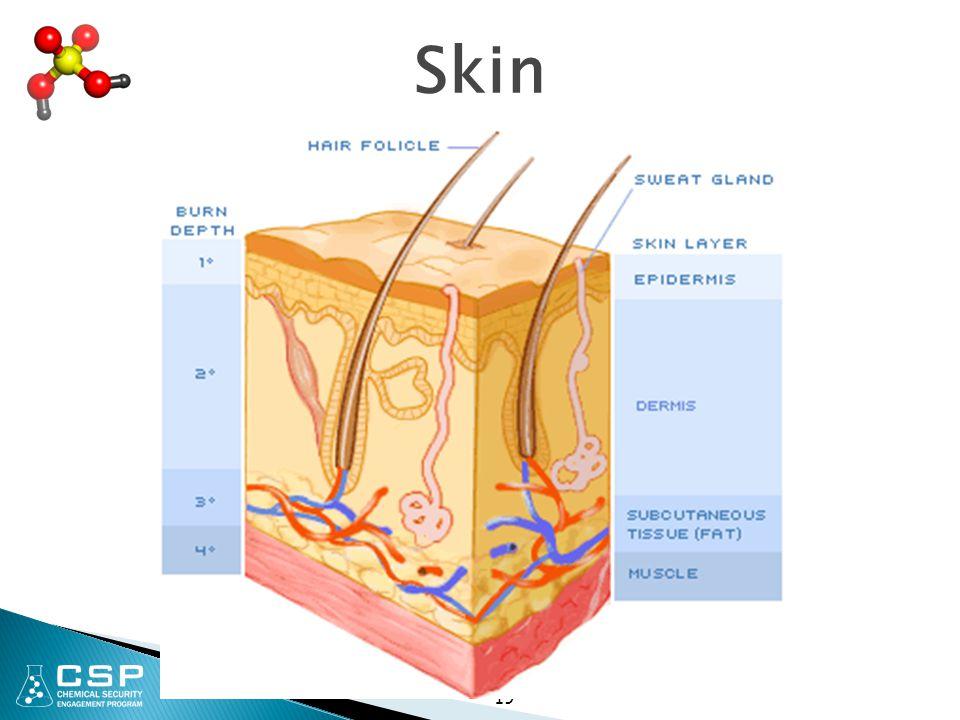 Skin 19