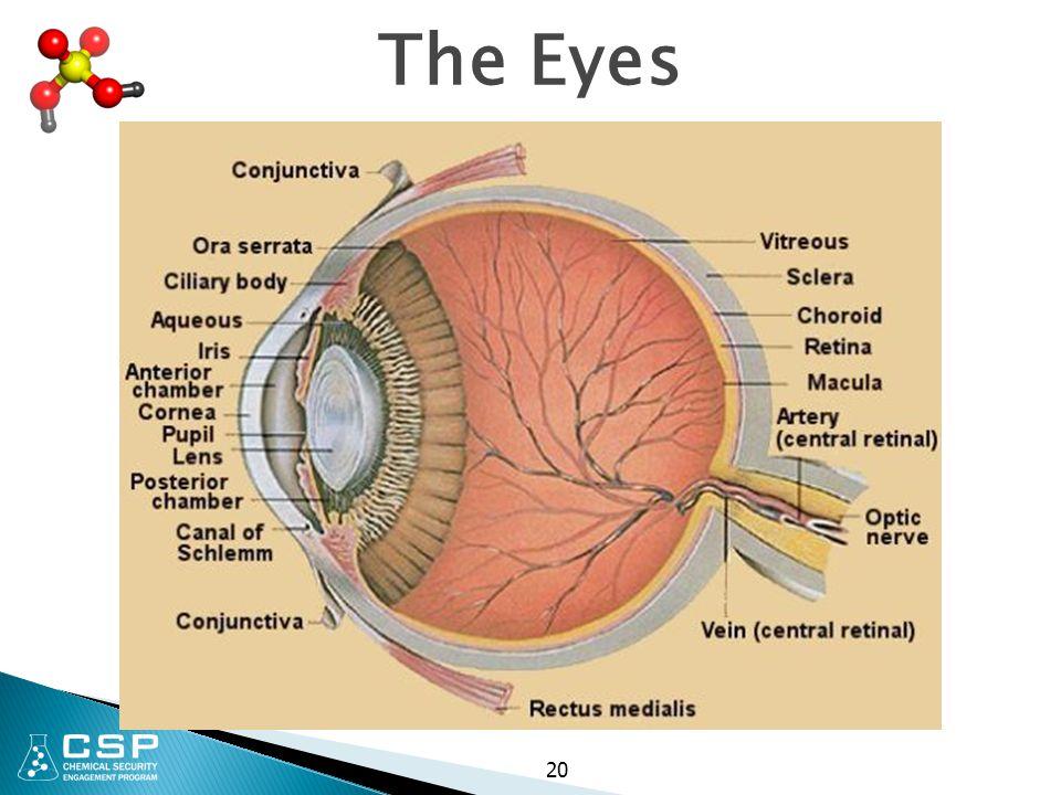 The Eyes 20