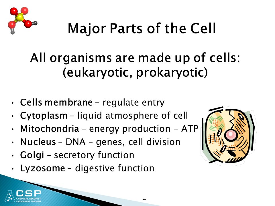 All organisms are made up of cells: