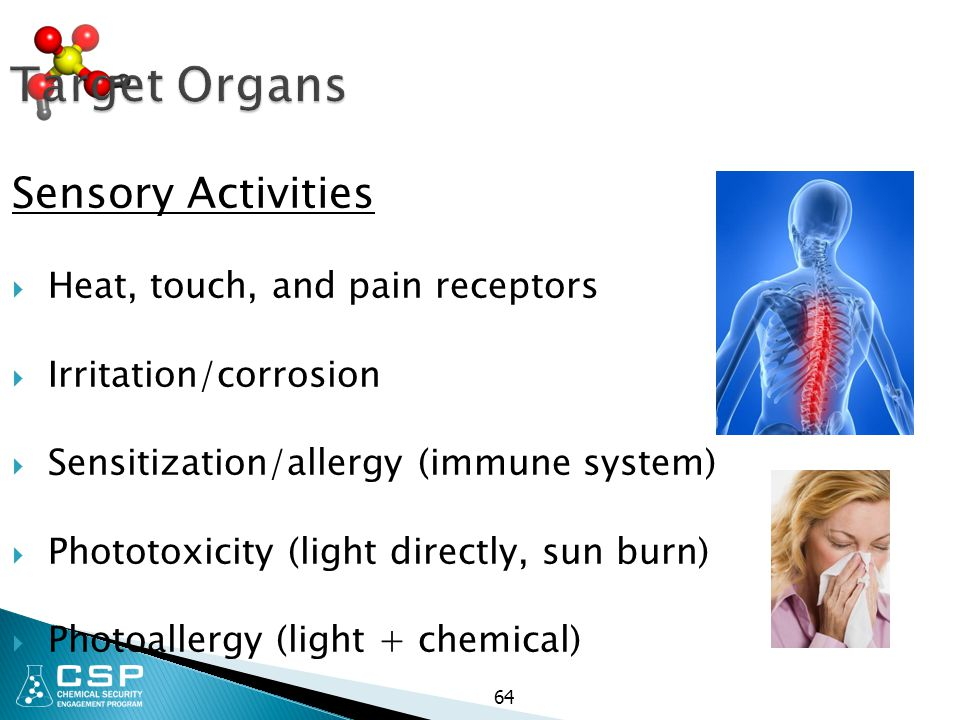Target Organs Sensory Activities Heat, touch, and pain receptors