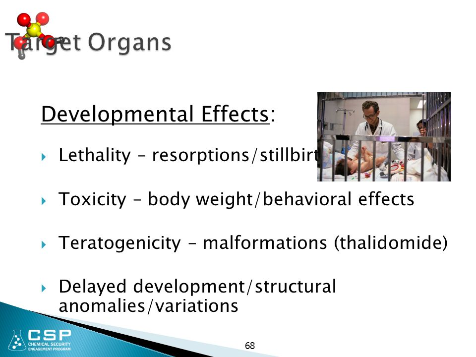 Target Organs Developmental Effects: