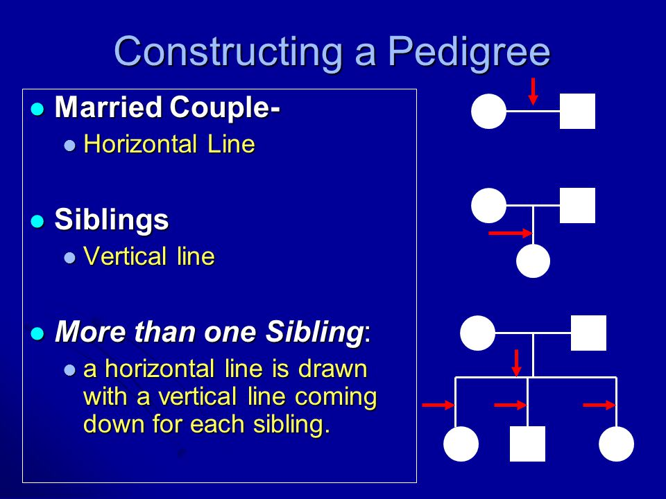 Constructing a Pedigree
