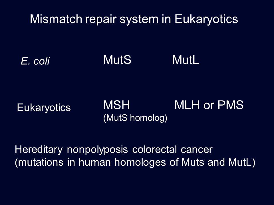 Mismatch repair system in Eukaryotics