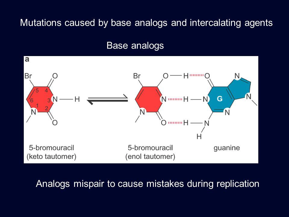 Mutations caused by base analogs and intercalating agents