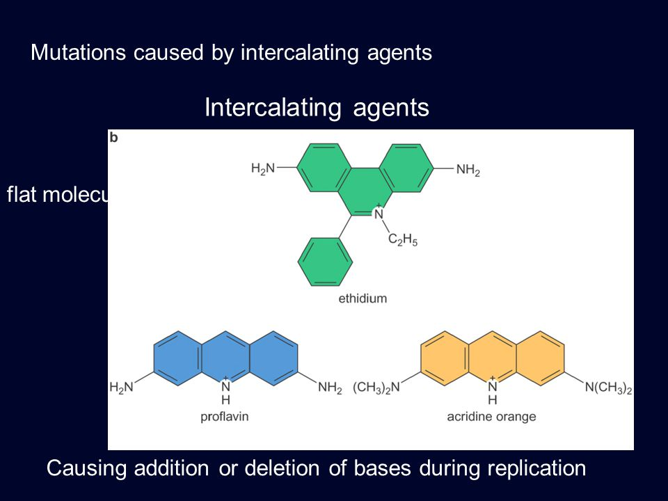 Intercalating agents Mutations caused by intercalating agents