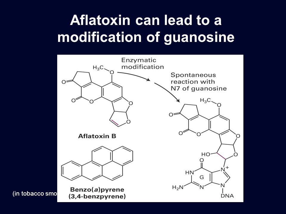 modification of guanosine