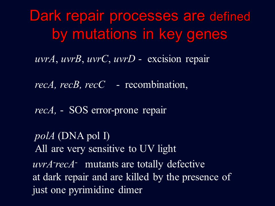 Dark repair processes are defined by mutations in key genes