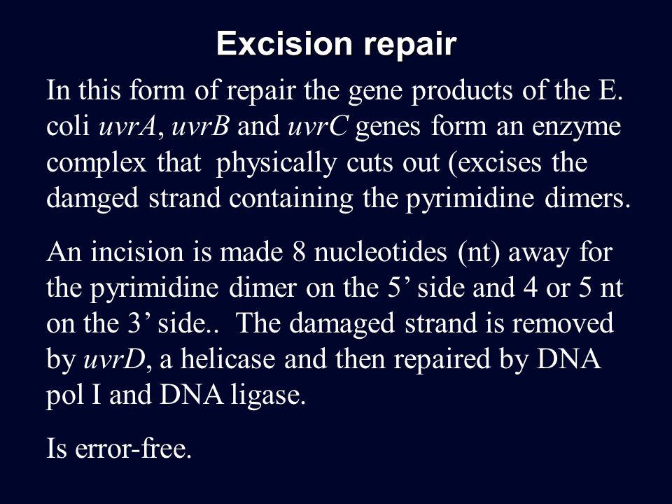 Excision repair
