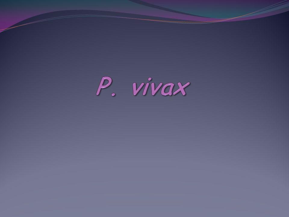 P. vivax