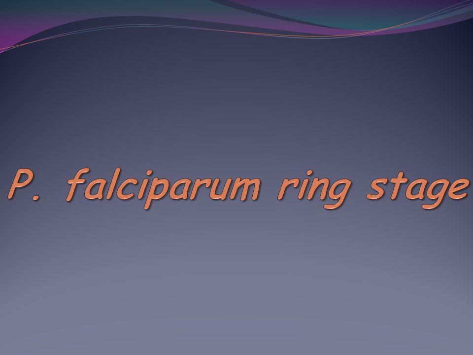 P. falciparum ring stage