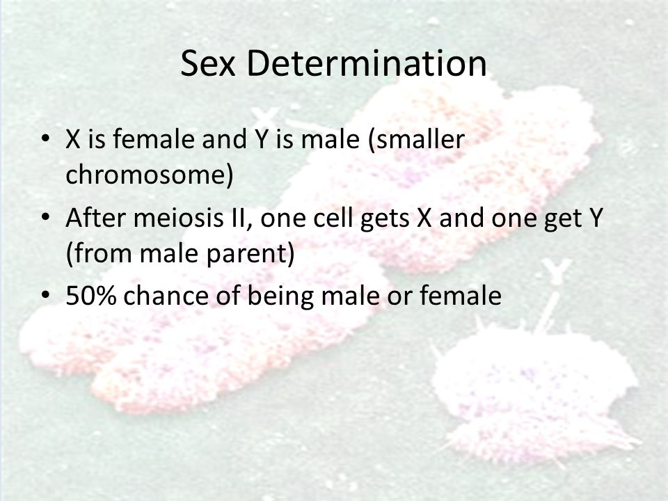Sex Determination X is female and Y is male (smaller chromosome)