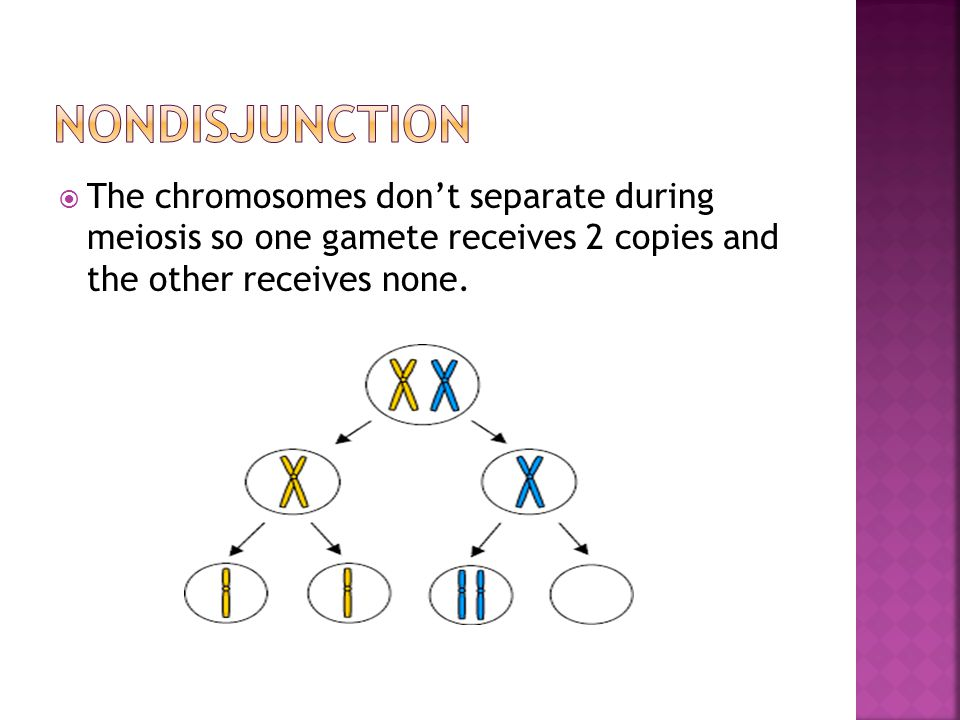 Nondisjunction The chromosomes don't separate during meiosis so one gamete receives 2 copies and the other receives none.