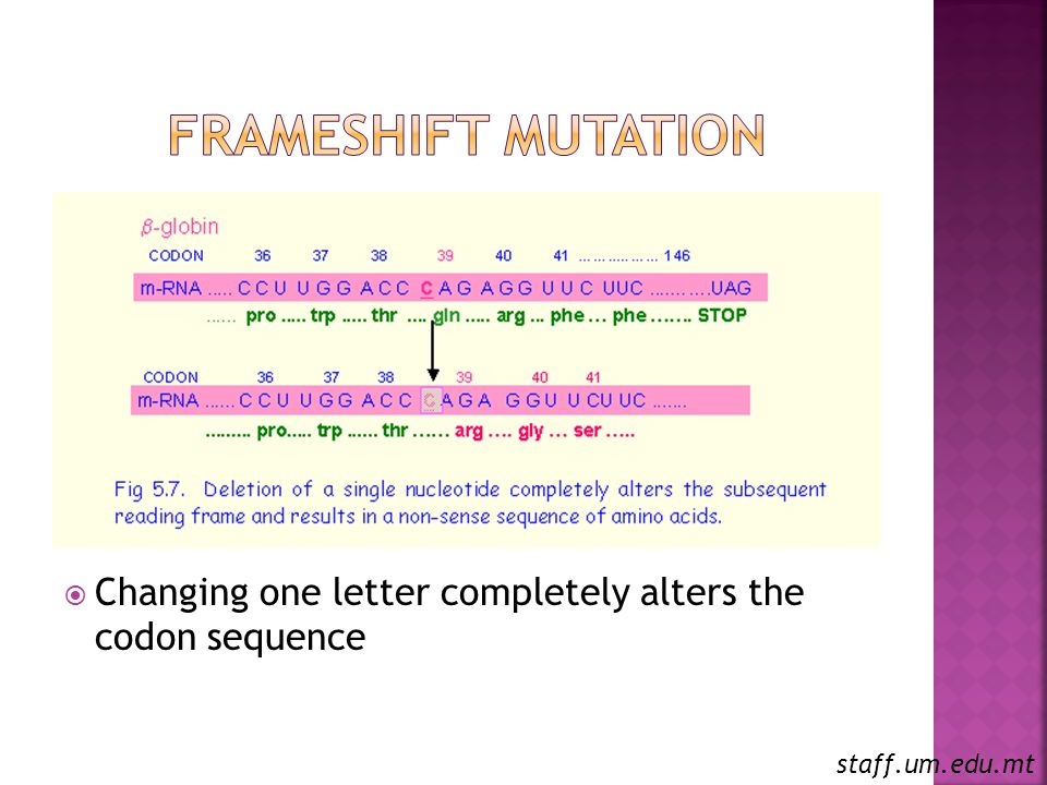 Frameshift Mutation Changing one letter completely alters the codon sequence staff.um.edu.mt