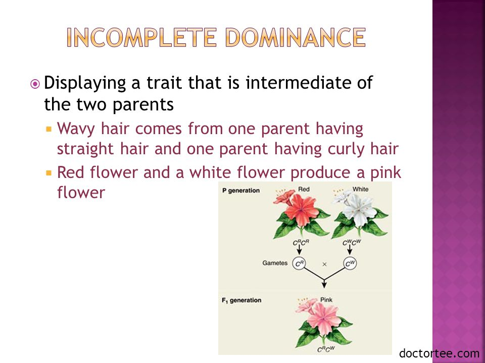 Incomplete Dominance Displaying a trait that is intermediate of the two parents.