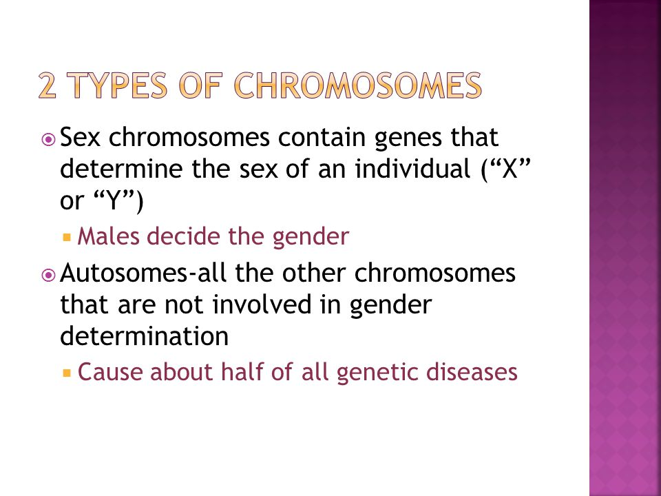 2 Types of Chromosomes Sex chromosomes contain genes that determine the sex of an individual ( X or Y )
