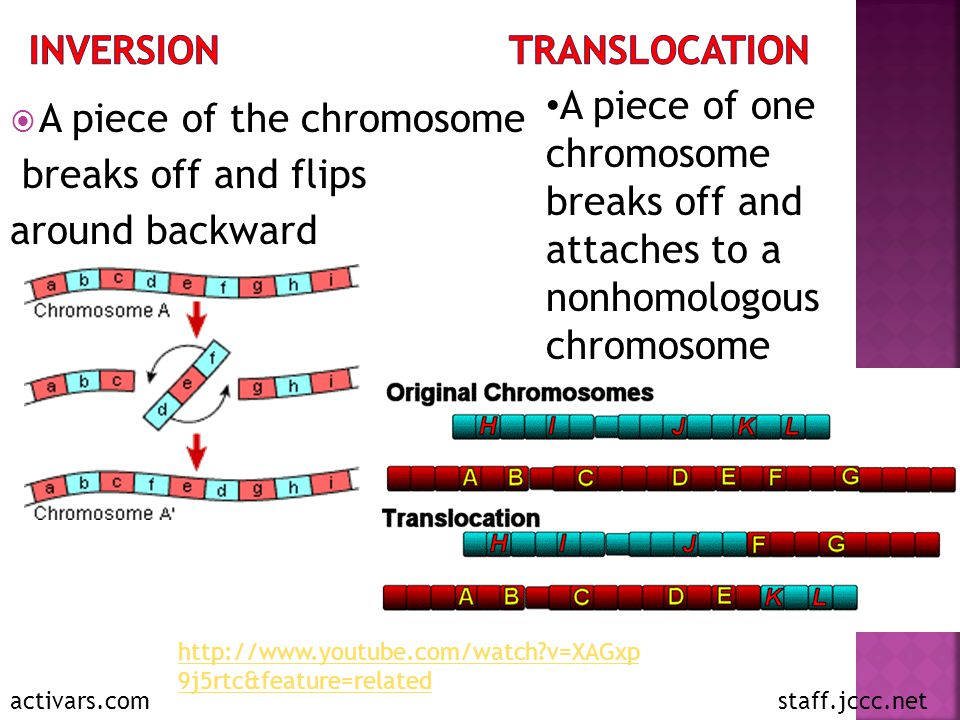 Inversion Translocation