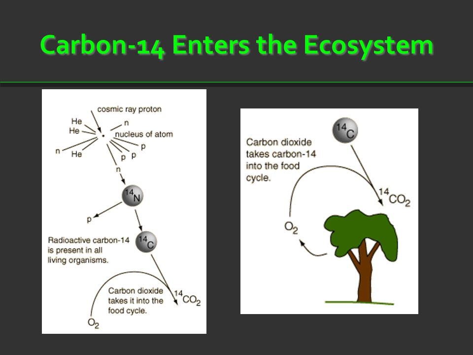 Carbon-14 Enters the Ecosystem