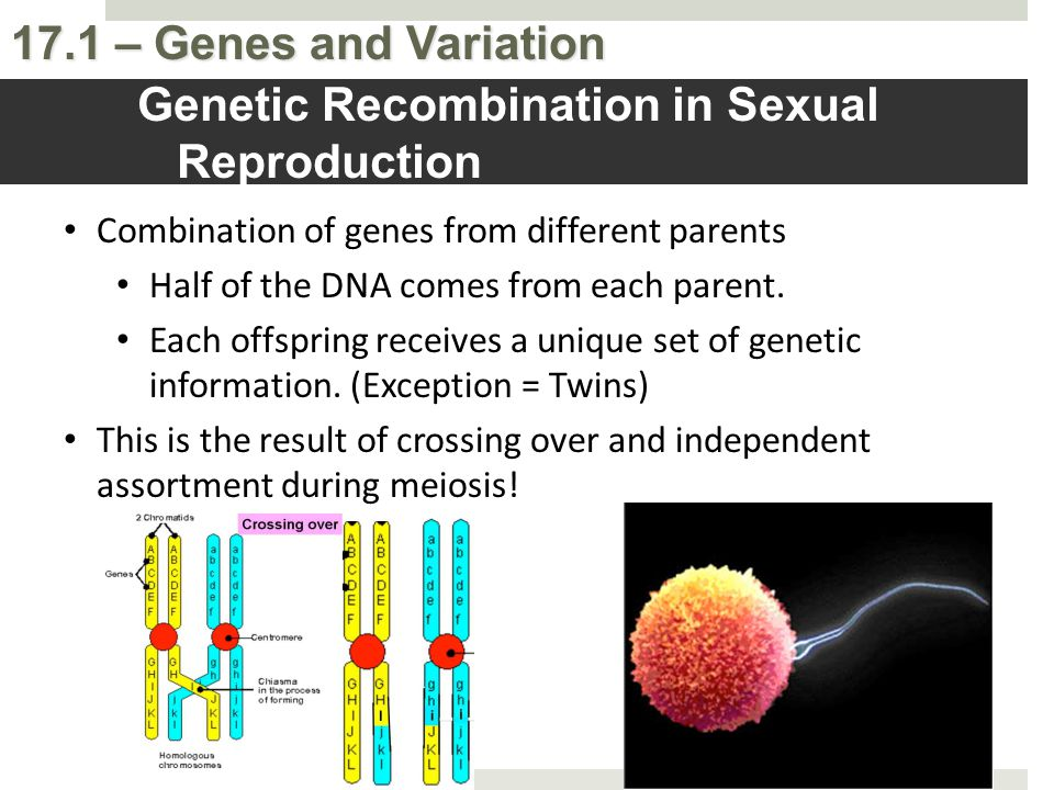Genetic Recombination in Sexual Reproduction