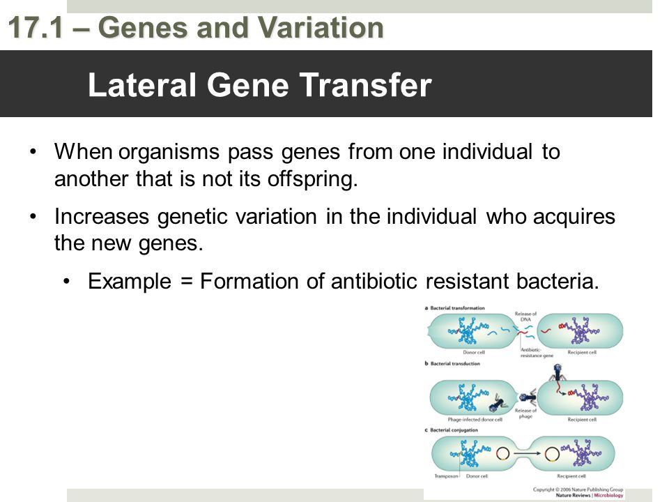 Lateral Gene Transfer When organisms pass genes from one individual to another that is not its offspring.