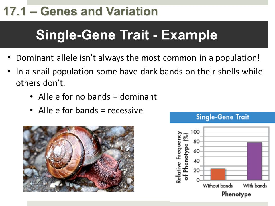 Single-Gene Trait - Example