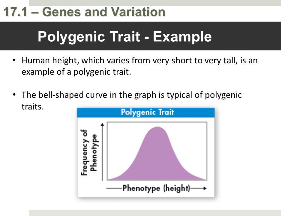 Polygenic Trait - Example
