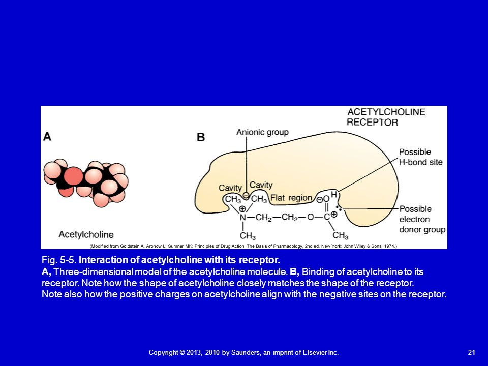 Fig. 5-5. Interaction of acetylcholine with its receptor.