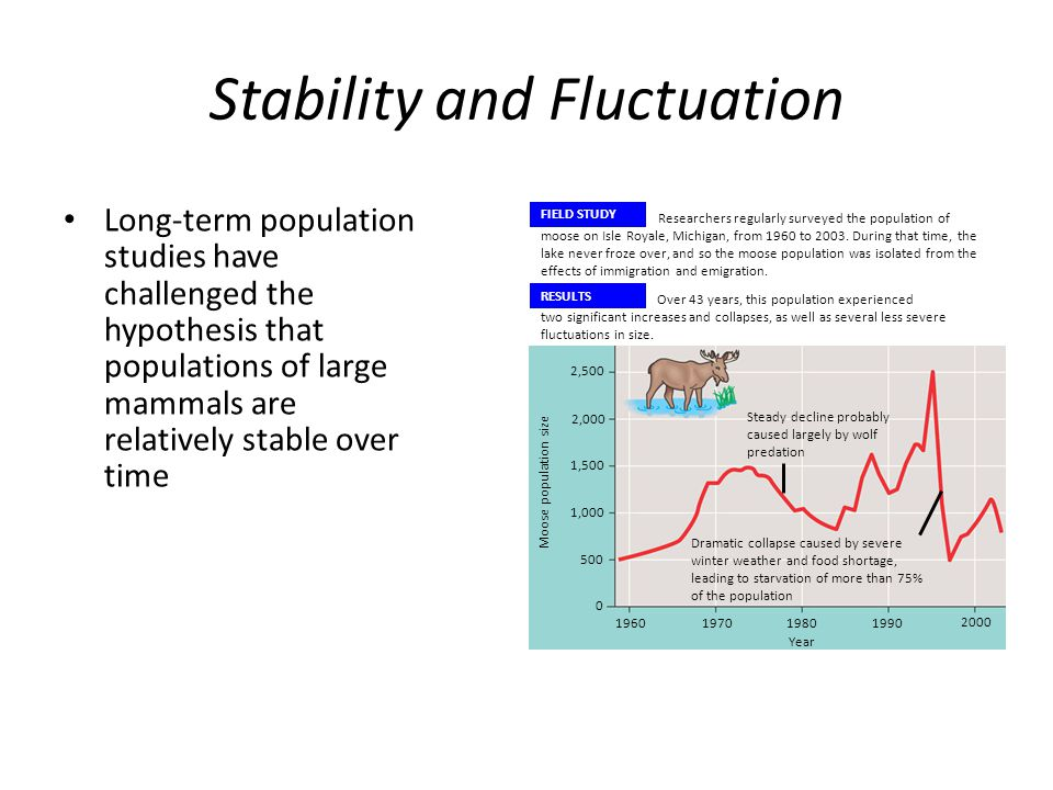 Stability and Fluctuation