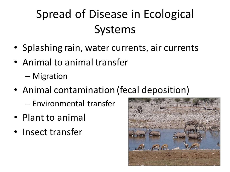 Spread of Disease in Ecological Systems