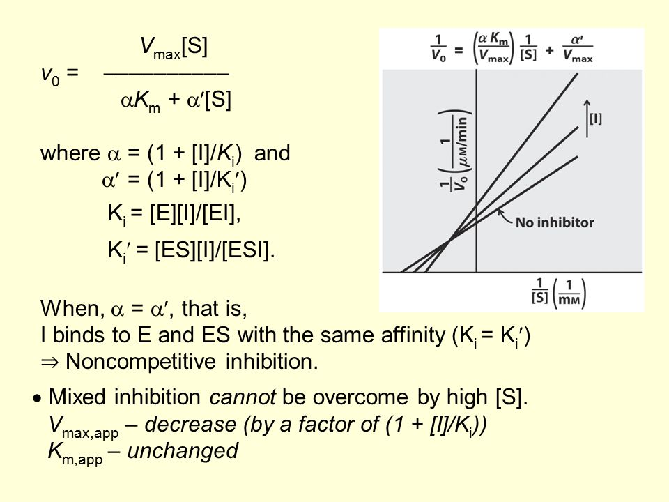 I binds to E and ES with the same affinity (Ki = Ki)
