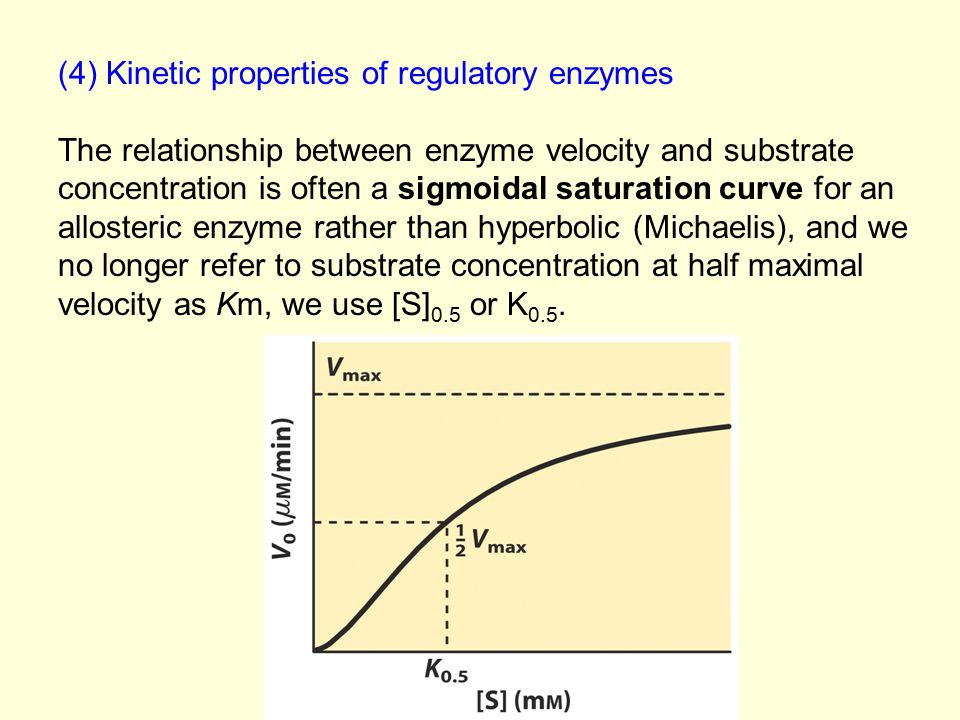 (4) Kinetic properties of regulatory enzymes