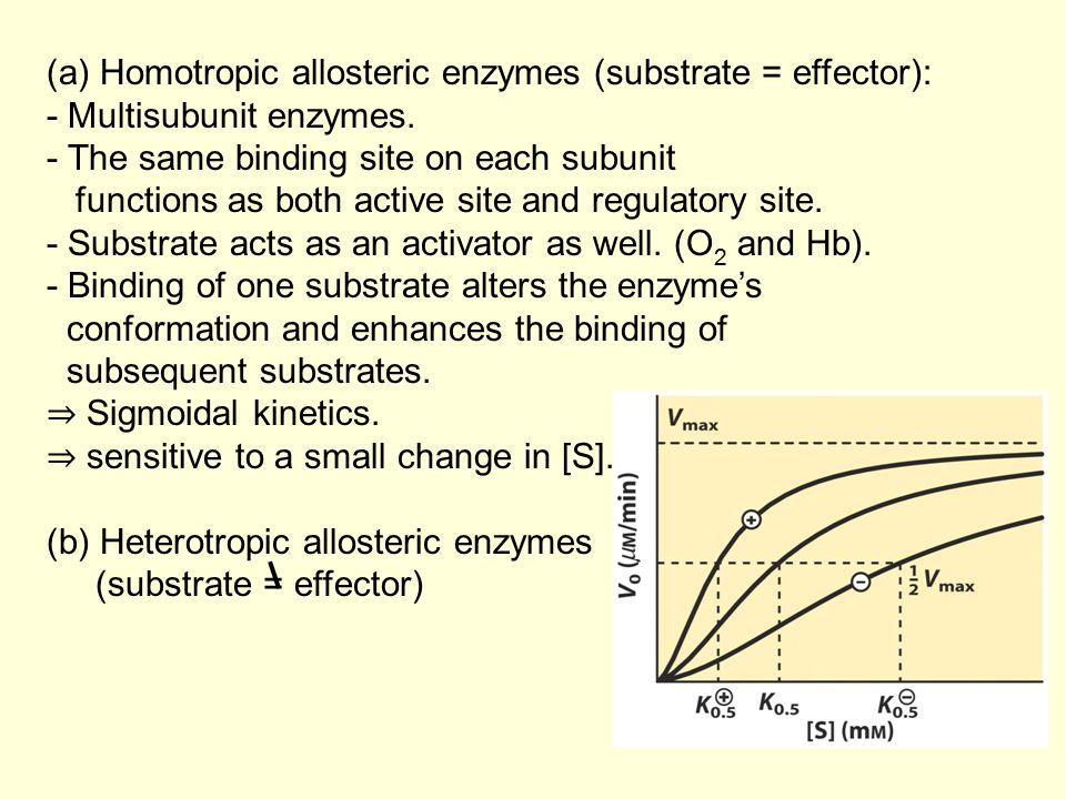 (a) Homotropic allosteric enzymes (substrate = effector):