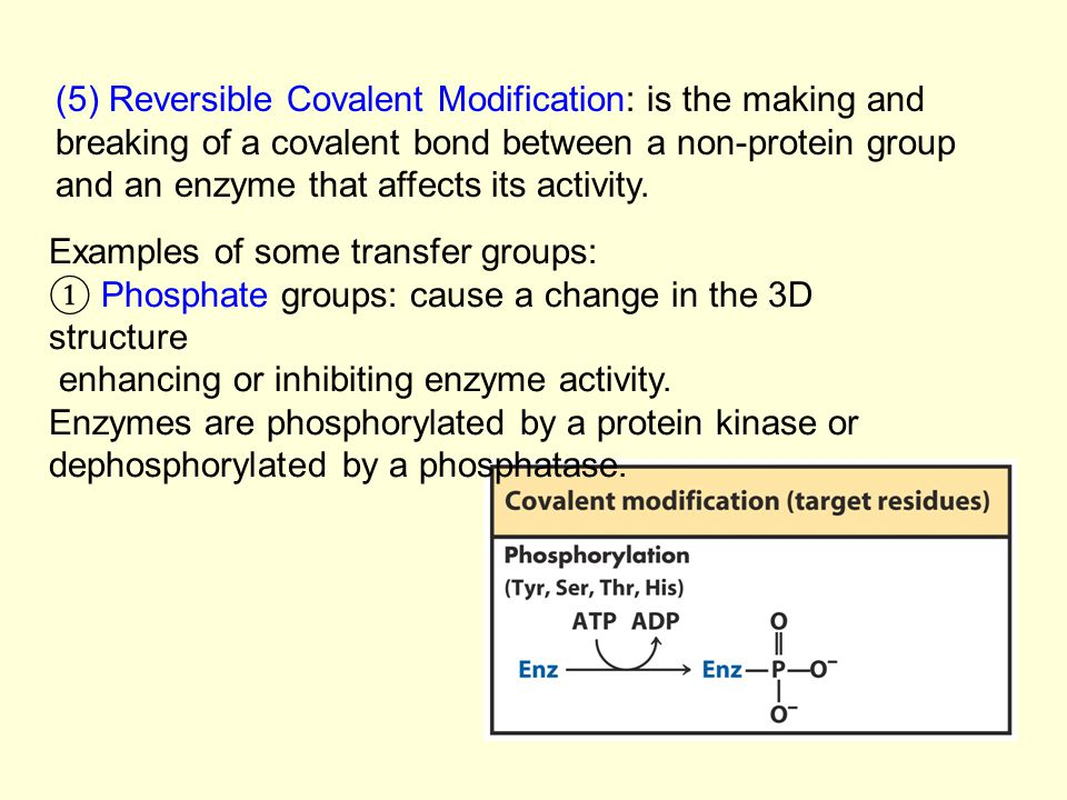 (5) Reversible Covalent Modification: is the making and breaking of a covalent bond between a non-protein group and an enzyme that affects its activity.