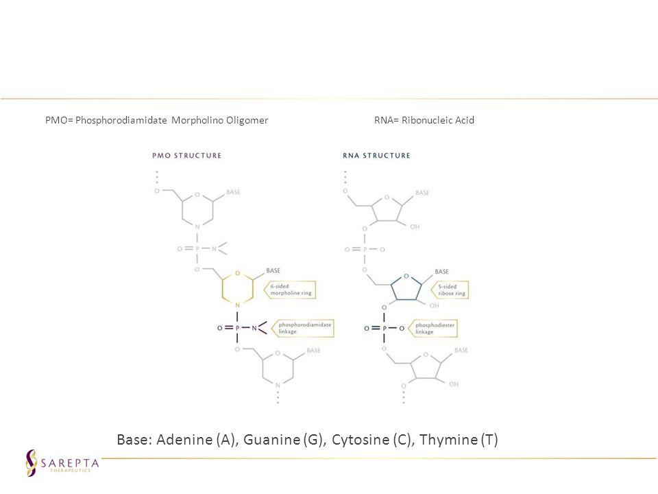 Base: Adenine (A), Guanine (G), Cytosine (C), Thymine (T)