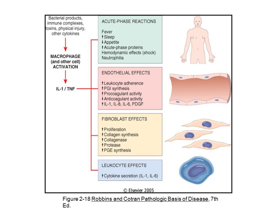 Figure 2-18 Robbins and Cotran Pathologic Basis of Disease, 7th Ed.