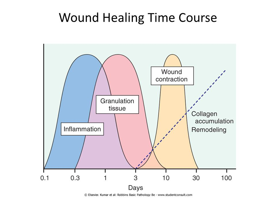 Wound Healing Time Course