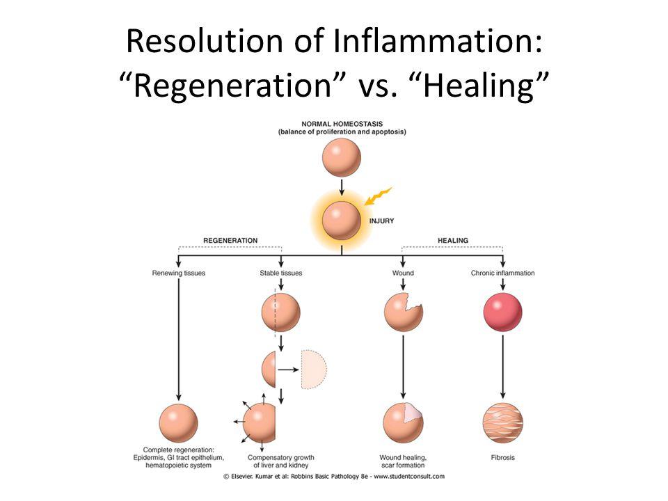 Resolution of Inflammation: Regeneration vs. Healing