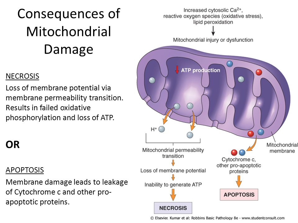Consequences of Mitochondrial Damage