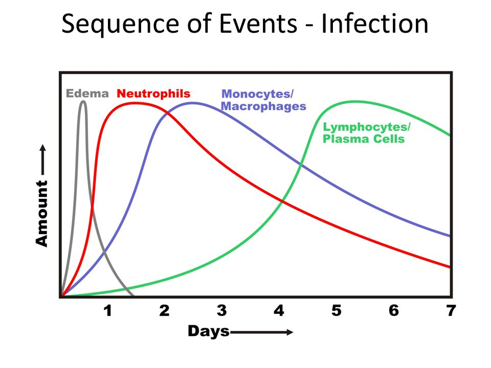 Sequence of Events - Infection