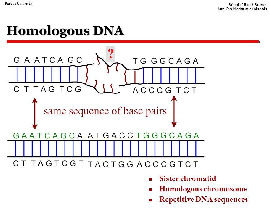 Homologous DNA Sister chromatid Homologous chromosome
