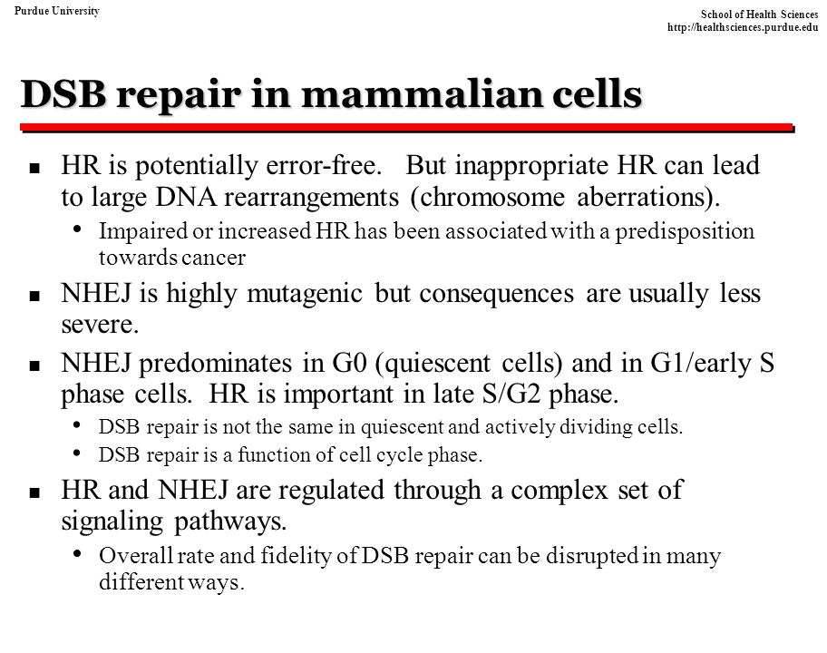 DSB repair in mammalian cells