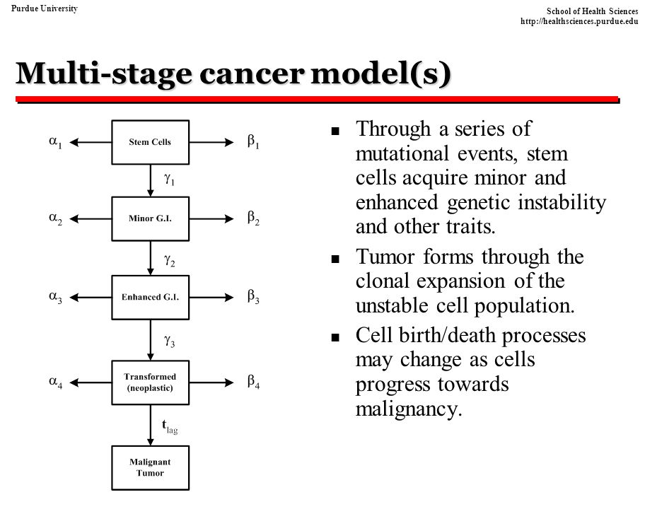 Multi-stage cancer model(s)