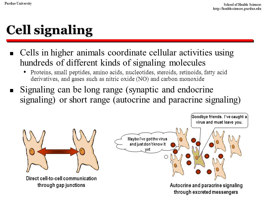 Cell signaling Cells in higher animals coordinate cellular activities using hundreds of different kinds of signaling molecules.